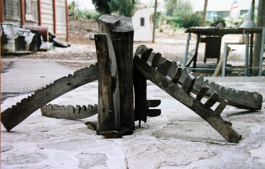 הצבה, עץ אבוקדו
