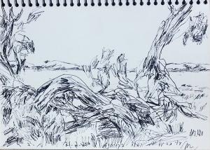 ימת המלח בפארק הלאומי קוררונג.