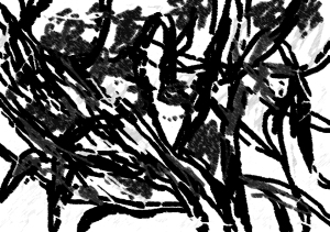 אקליפטוס מאלי בגירסה מפולטרת 2