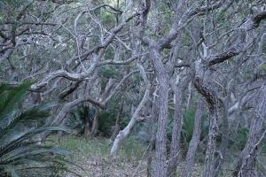 יער הגשם בסאות' דורס ניו סאוז וויילס